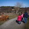 Kennemer koeien