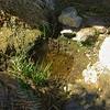 Mopah Spring