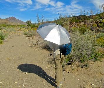 Ray Jarden's desert umblrella