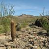 Ocotillo barrel & yucca