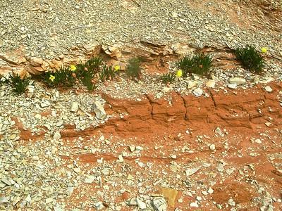Flowers on a ledge