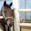 A horse in the stables at the Baldy Hughes Therapeutic Community and Farm.   June 1 2016