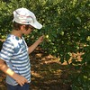 ALEX CHECKS OUT THE SMALL APPLES IN THE ORCHARD