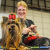 MET 042416 DOG SHOW 6