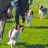 MET 042416 DOG SHOW 4