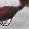 MET041116 rain crab