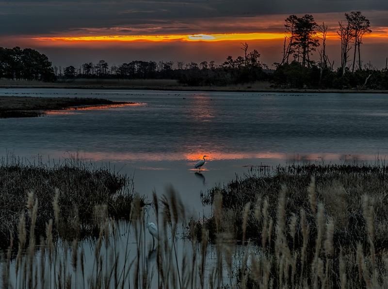 Great Egrets at Sunrise