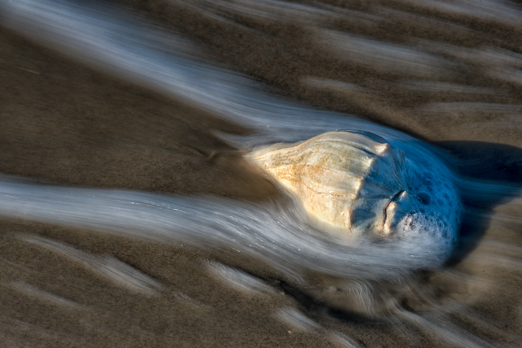 Sea shell in the surf