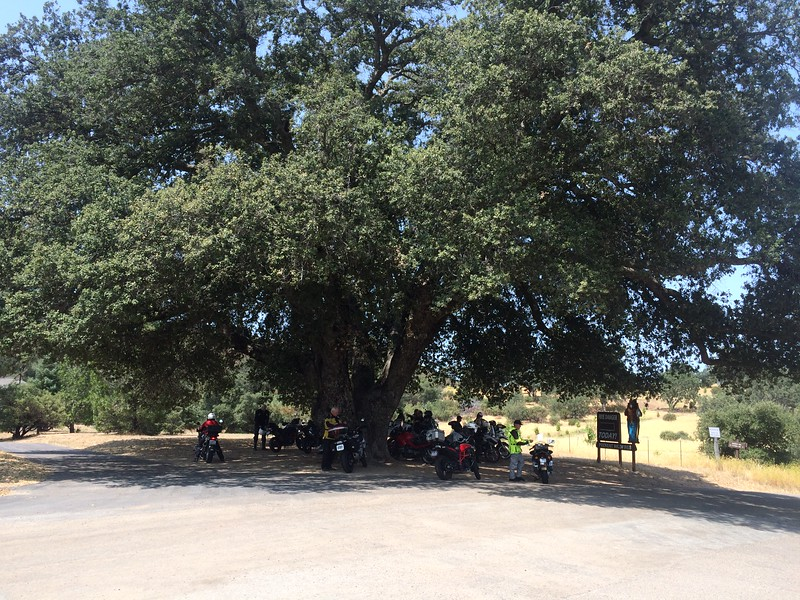 Brief rest stop at the big tree.
