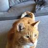Reggie & Lulu Face Off