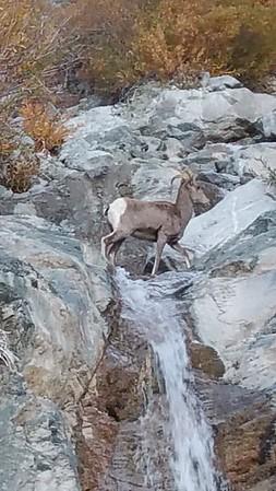 Baldy - Gold Mine Hike - Nov 13, 2016