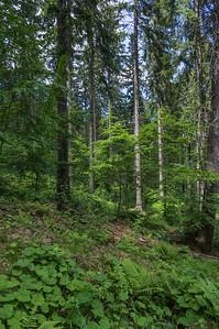 On the path towards Großer Arber