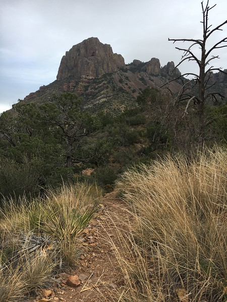 2016 Big Bend National Park Trip