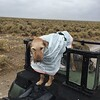 0525 Murphy's new rain coat