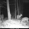 ONE NICE BUCK ON THE LEFT SIDE....SNACKING CORN..NOT DOES]
