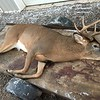 THIS IS JOE'S FIRST BUCK....8 POINTS, NICE SIZE BODY TOO