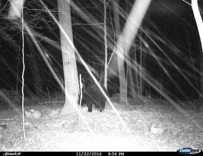 IT'S SNOWING....AND A BEAR COMES TO DOUG'S STAND  !!!