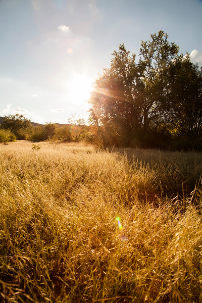 The setting sun highlights some grassy ranchland in Sonora, Mexico.