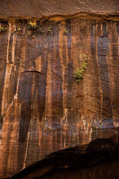 Water streaks paint the walls of Zion's narrows with natural shades of red and brown.