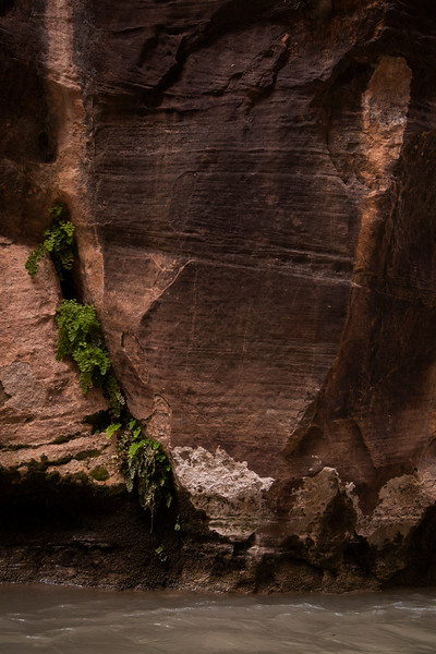 Plants adorn the featured walls of the Narrows in upper Zion Canyon.