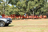 16-05-01_Red_3751-A