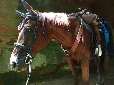 Suzanne Livingston-Cave Horse