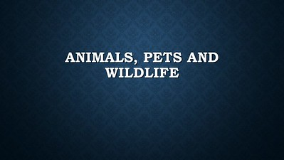 Animals / Pets / Wildlife
