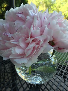 michele conway-Peony