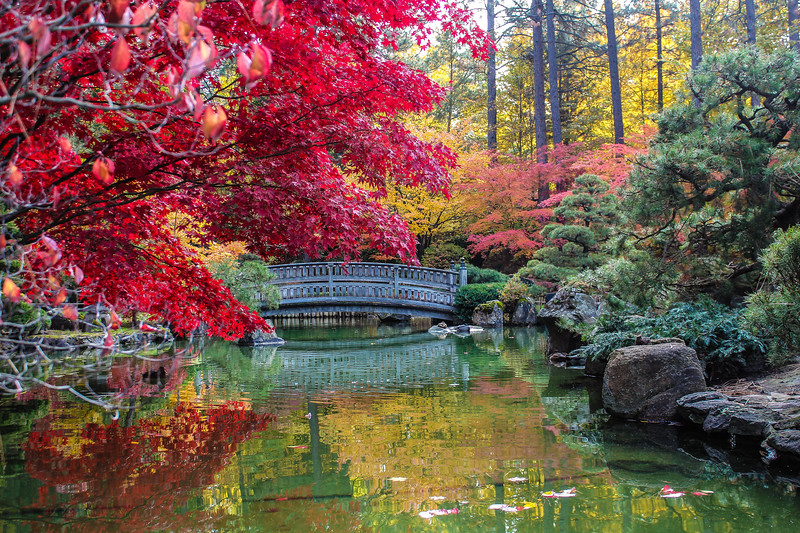 Fall Color at the Japanese Gardens...