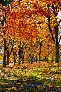 Fall at Minnehaha Park...