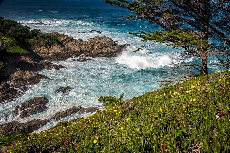 West Coast Photo Trip 201602-27