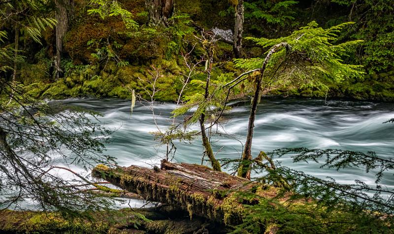 McKenzie River Waterfall Loop Trail