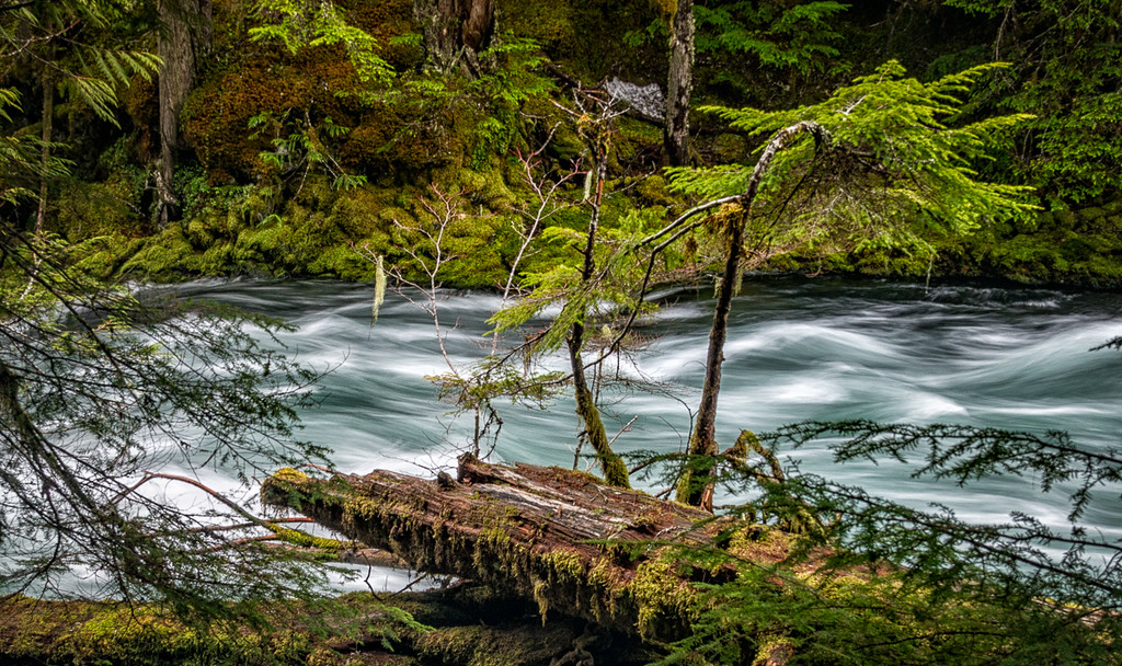 McKenzie River Waterfall Loop Trail
