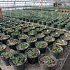 MET022316 flowers pots