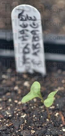 MET022316 flowers cabbage
