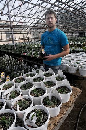 MET022316 flowers welsh