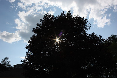 Maple, sun, sky