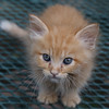 Foster Pictures