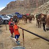 112 Joseph Thomas checking out Pack Horses