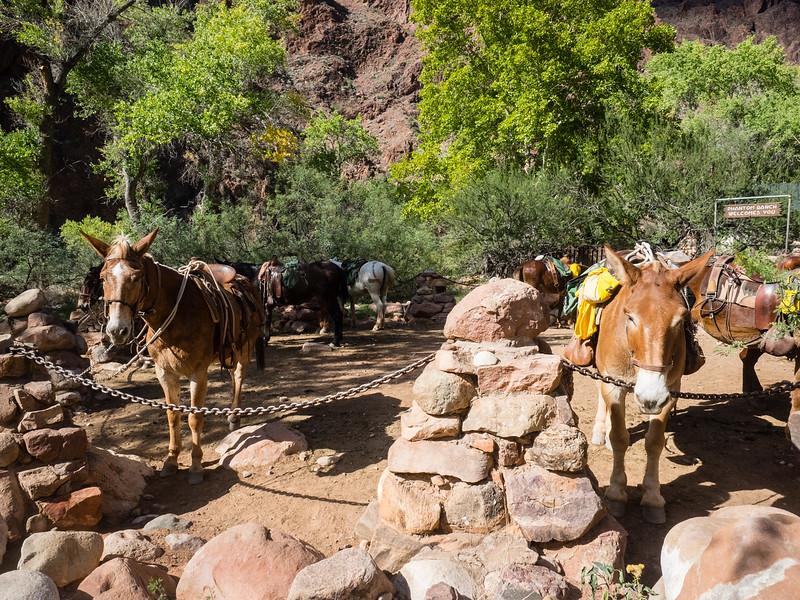 Phantom Ranch visitors