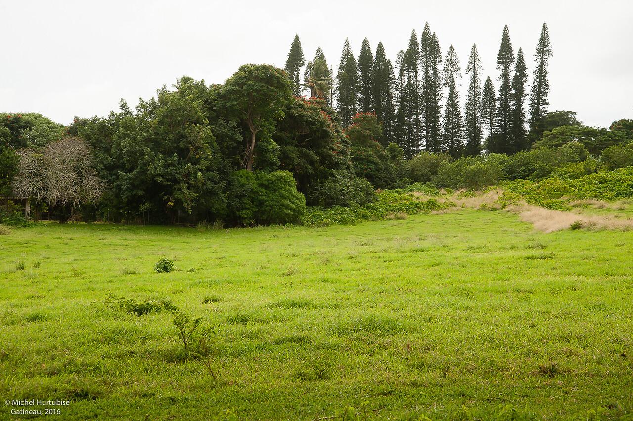 Hawaii-6092