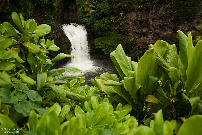 Hawaii-6184