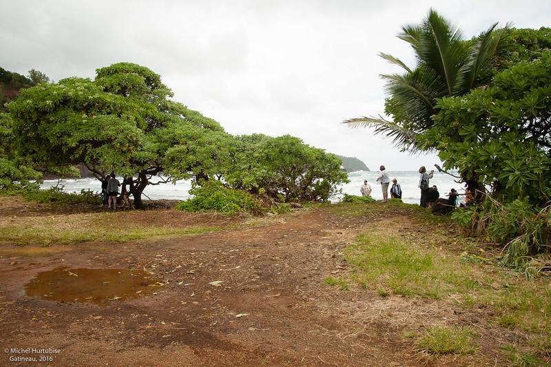 Hawaii-6135