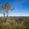 Pacheco Ridge