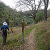 Madrone Springs Trail Junction