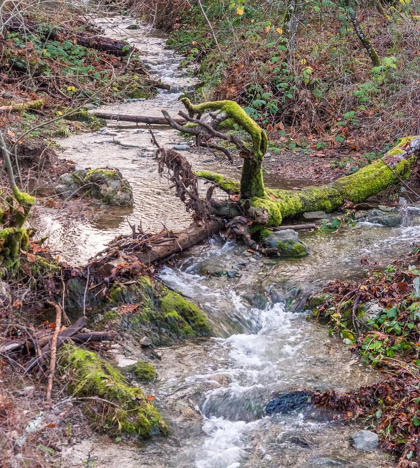 Jackson Fork Trail