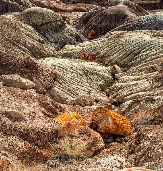 Petrified Forest16