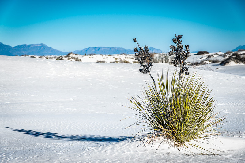 White Sands7
