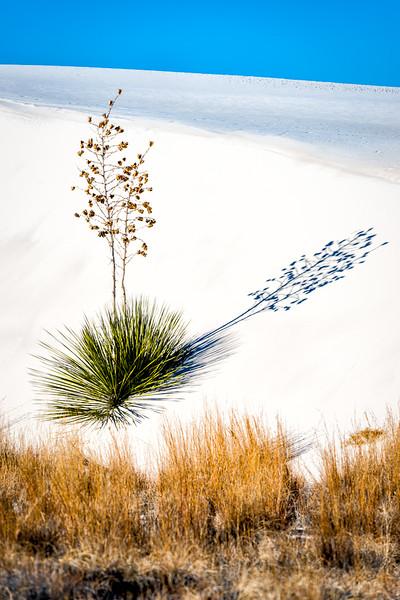 White Sands9