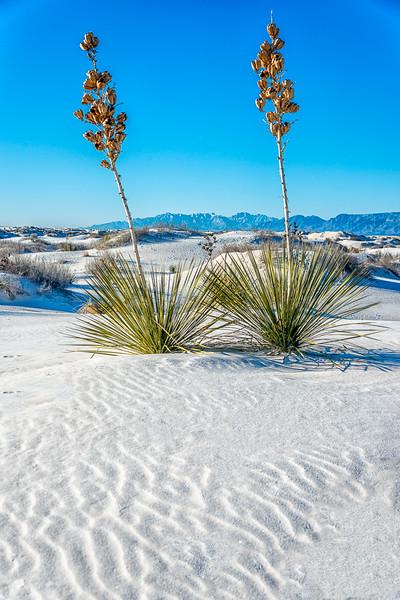White Sands3